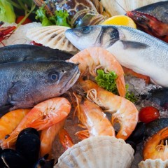 to do-gastronomy seafood-164664